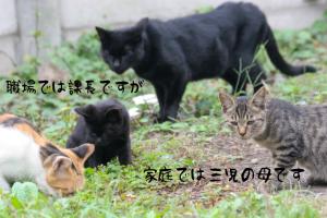 cat0080-066