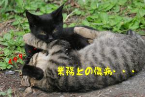 cat0083-066